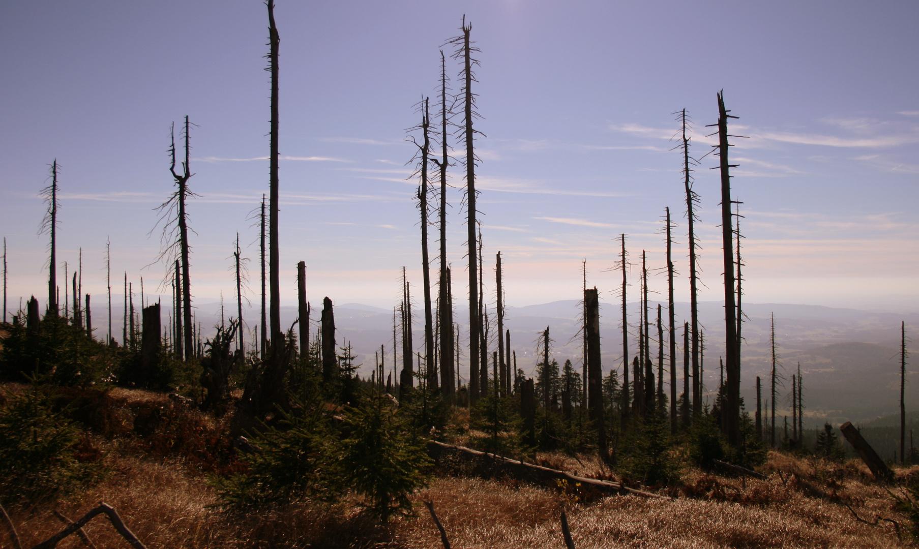 es war ein Wald