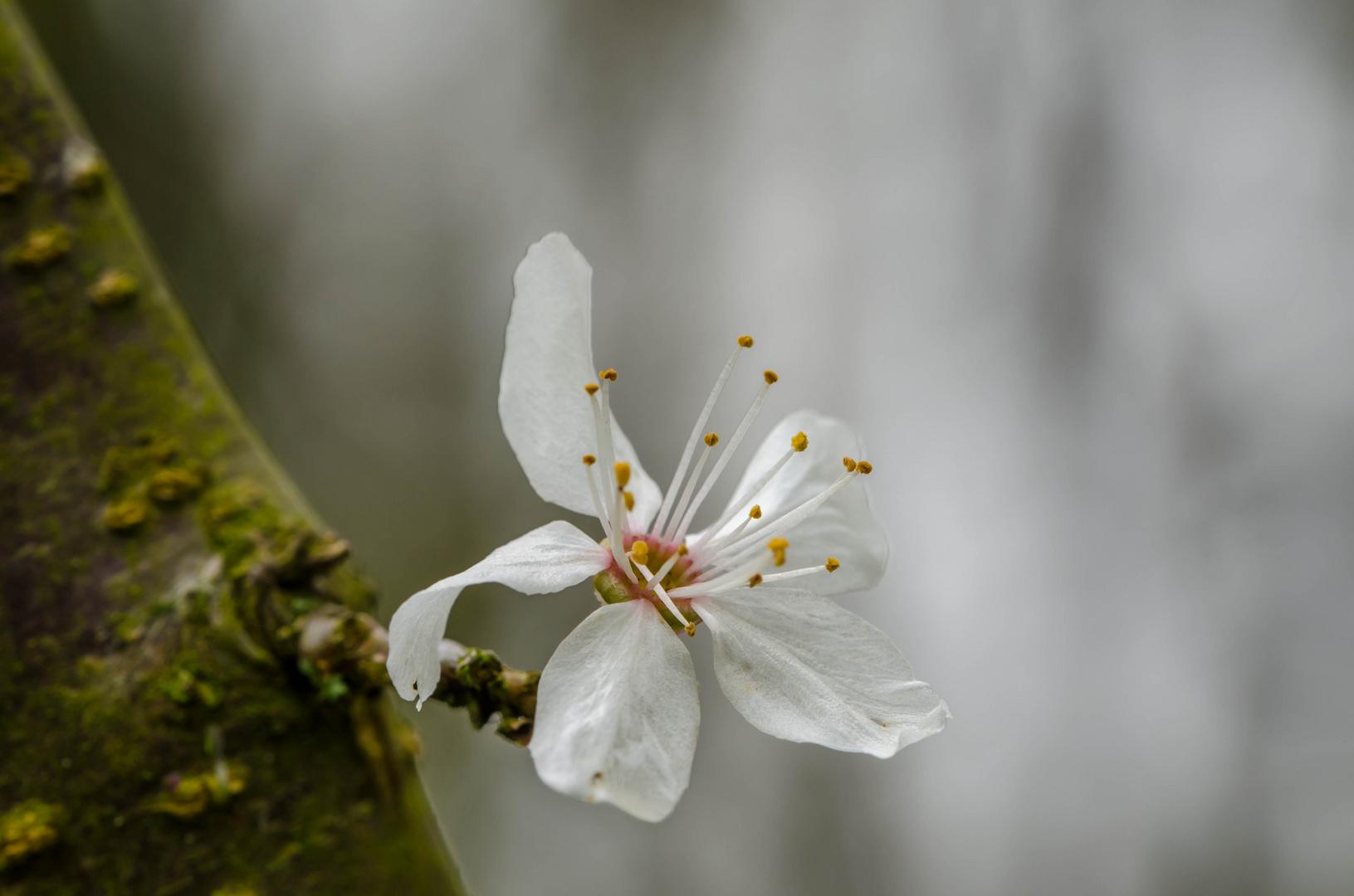 Es wir Frühling!