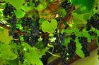 ...... es wird a Wein sein und der wird fein sein.....
