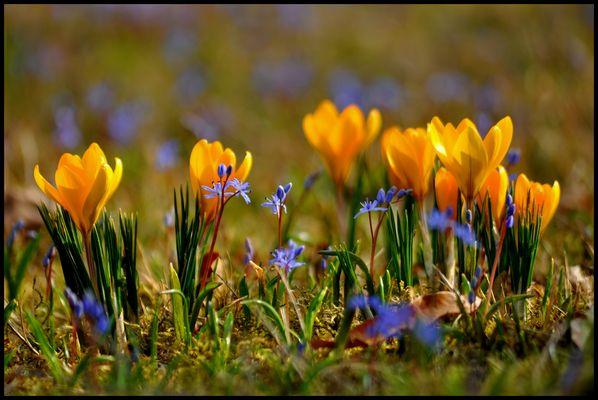 ... es wird Frühling