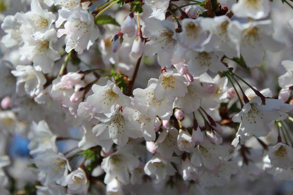 Es wird Frühling...