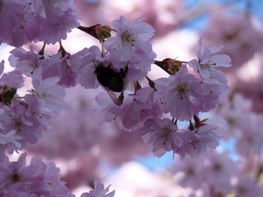 Es wird Frühling. Endlich!