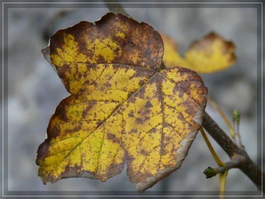 ...es wird Herbst...
