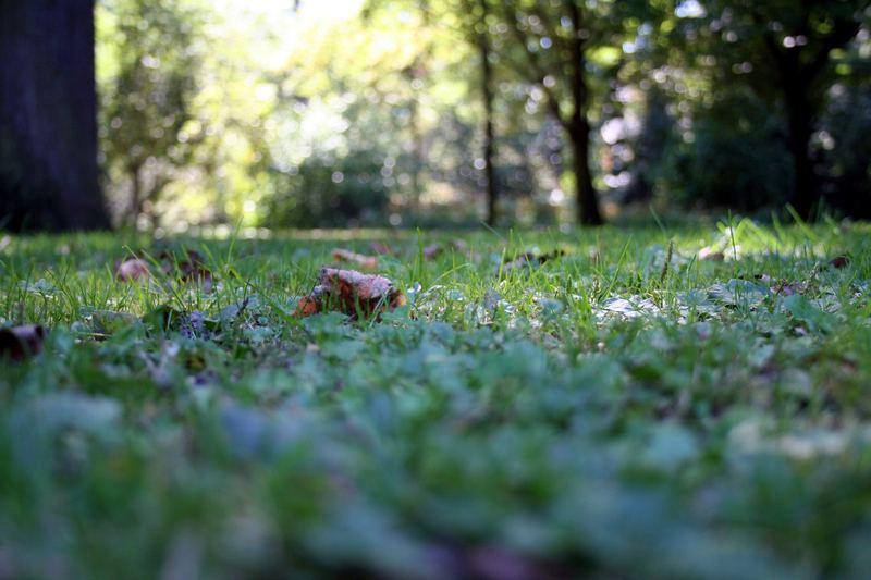 ... es wird Herbst ...