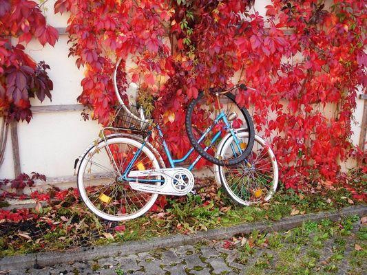 Es wird Herbst ...