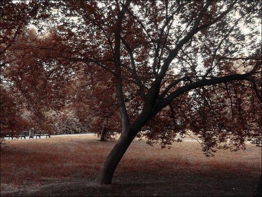 Es wird Herbst...