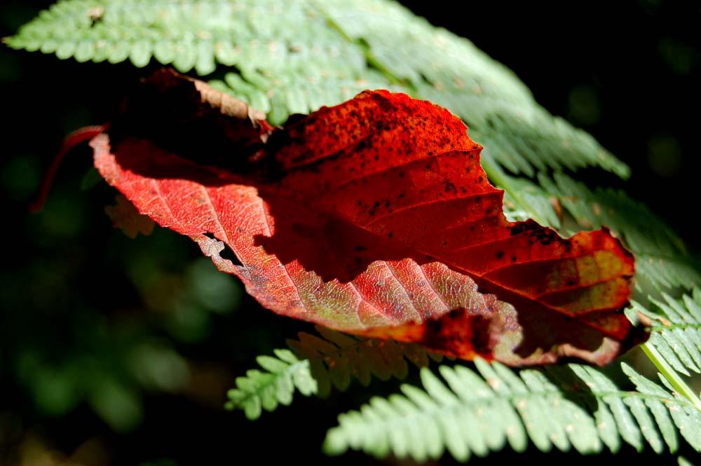 Es wird Herbst III