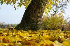 ...es wird jetzt wirklich Herbst