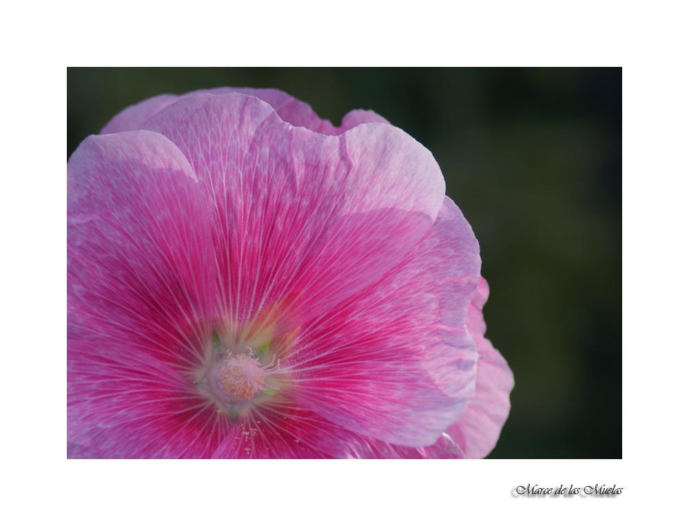 ...esa extraña flor 2...
