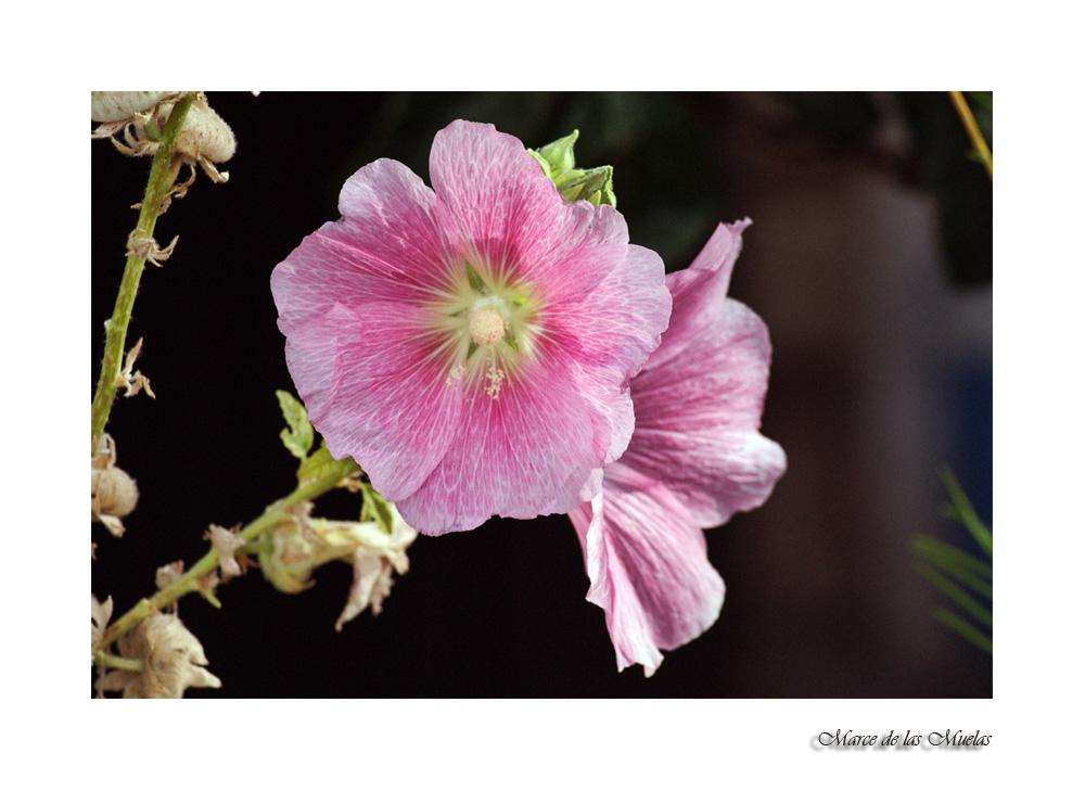 ...esa extraña flor...