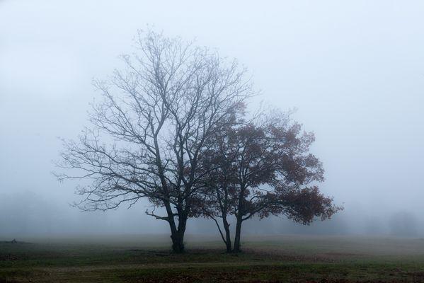 Escapade dans la brume