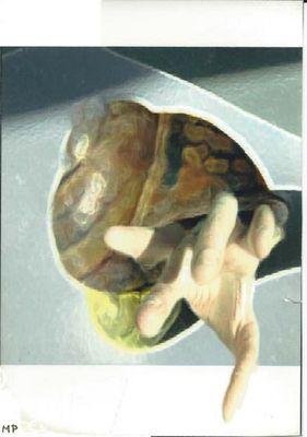Escargot Hybride