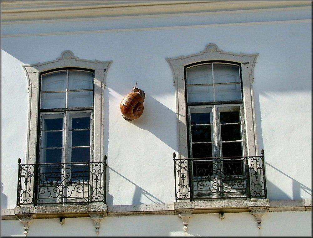 Escargot sur le mur