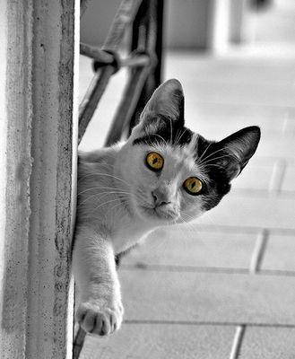 Ese lindo gatito Mallorquin.
