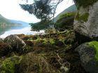Esefjord
