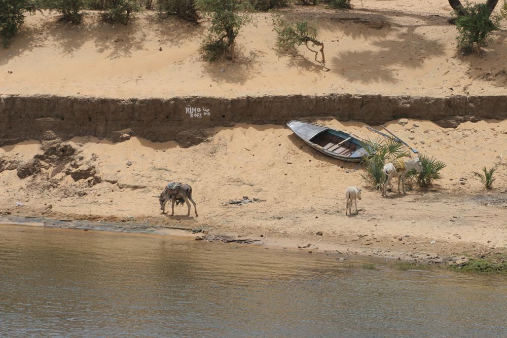 Esel am Nilufer