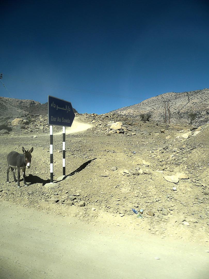 Esel am Wegesrand