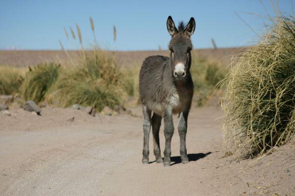Esel im Weg