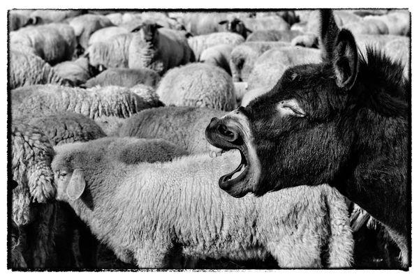 Esel mit Migrationshintergrund