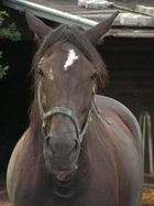 Esel oder Pferd???