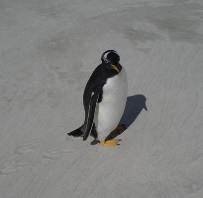 (Esels?)-Pinguin