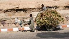 Eselskarren bergab Luxor story