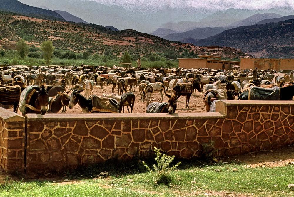 Eselsmarkt in Asni