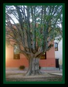 ESPECTACULAR ARBOL