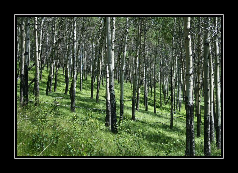 Espen Wald