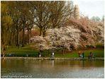 Esperando la primavera en Central Park NY