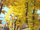 Esplosione d'autunno