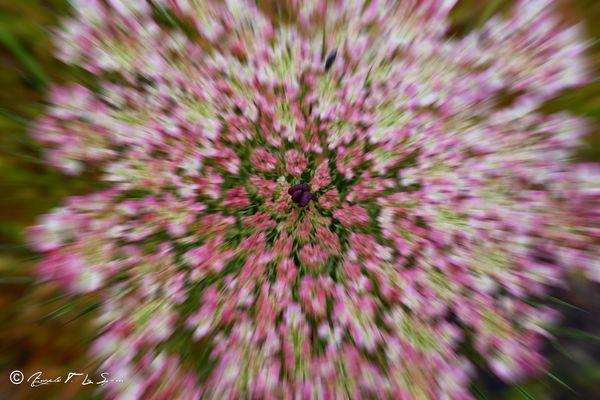 Esplosione floreale