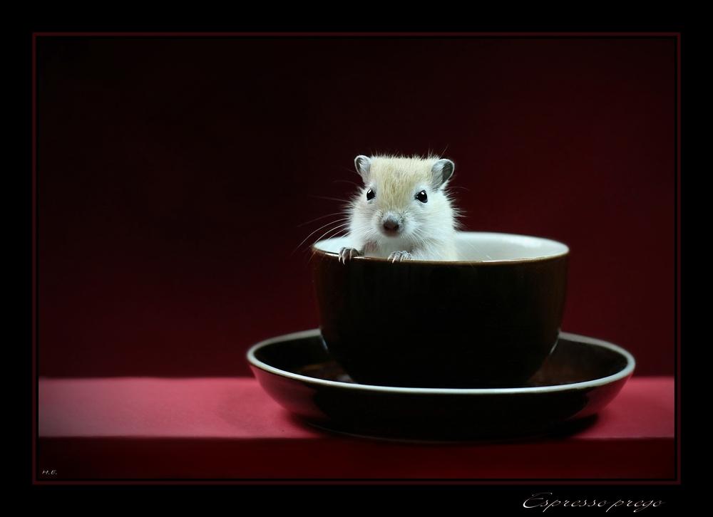 *** Espresso Prego ***