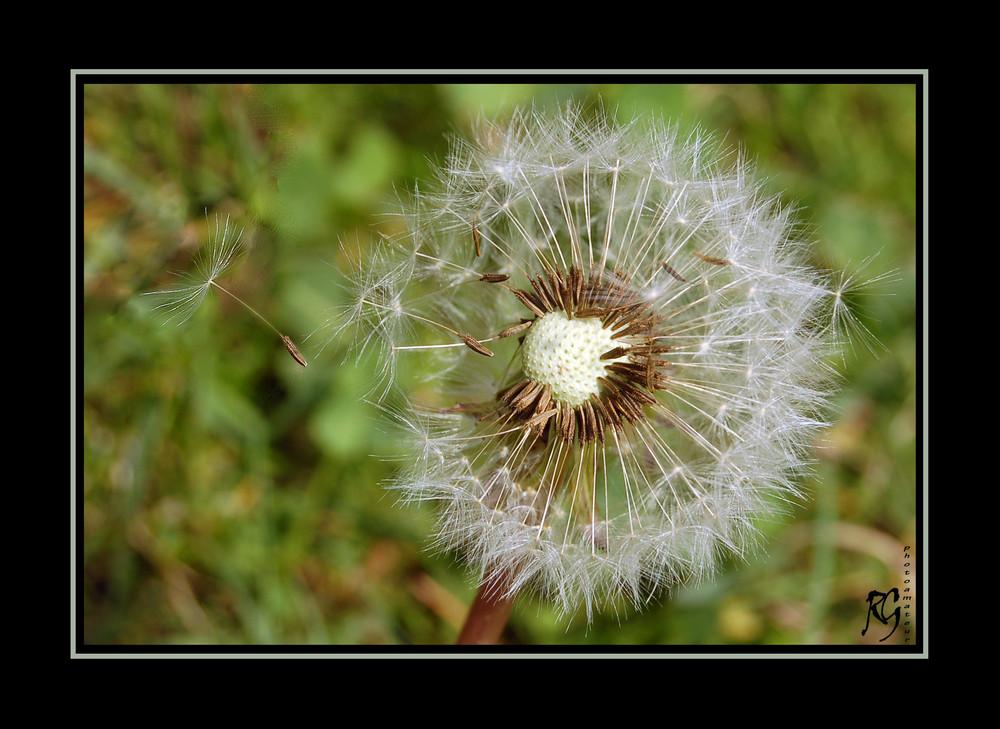 Esprimi un desiderio... - dedicata a Stefano -