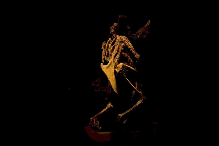 esqueleto de un pollo