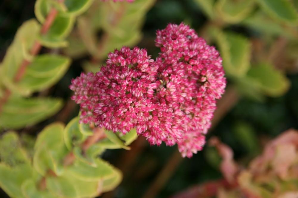 Essais macro fleurs