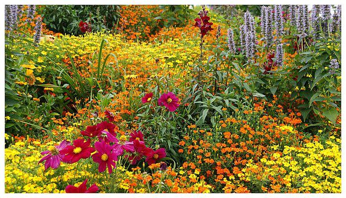 Essbare Blüten @ BUGA 2009 Schwerin