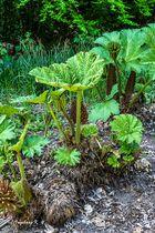 Essen - Gruga - exotische Pflanze -