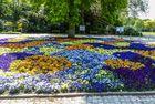 Essen - Gruga im Frühling - Stiefmütterchen in großer Farbenvielfalt