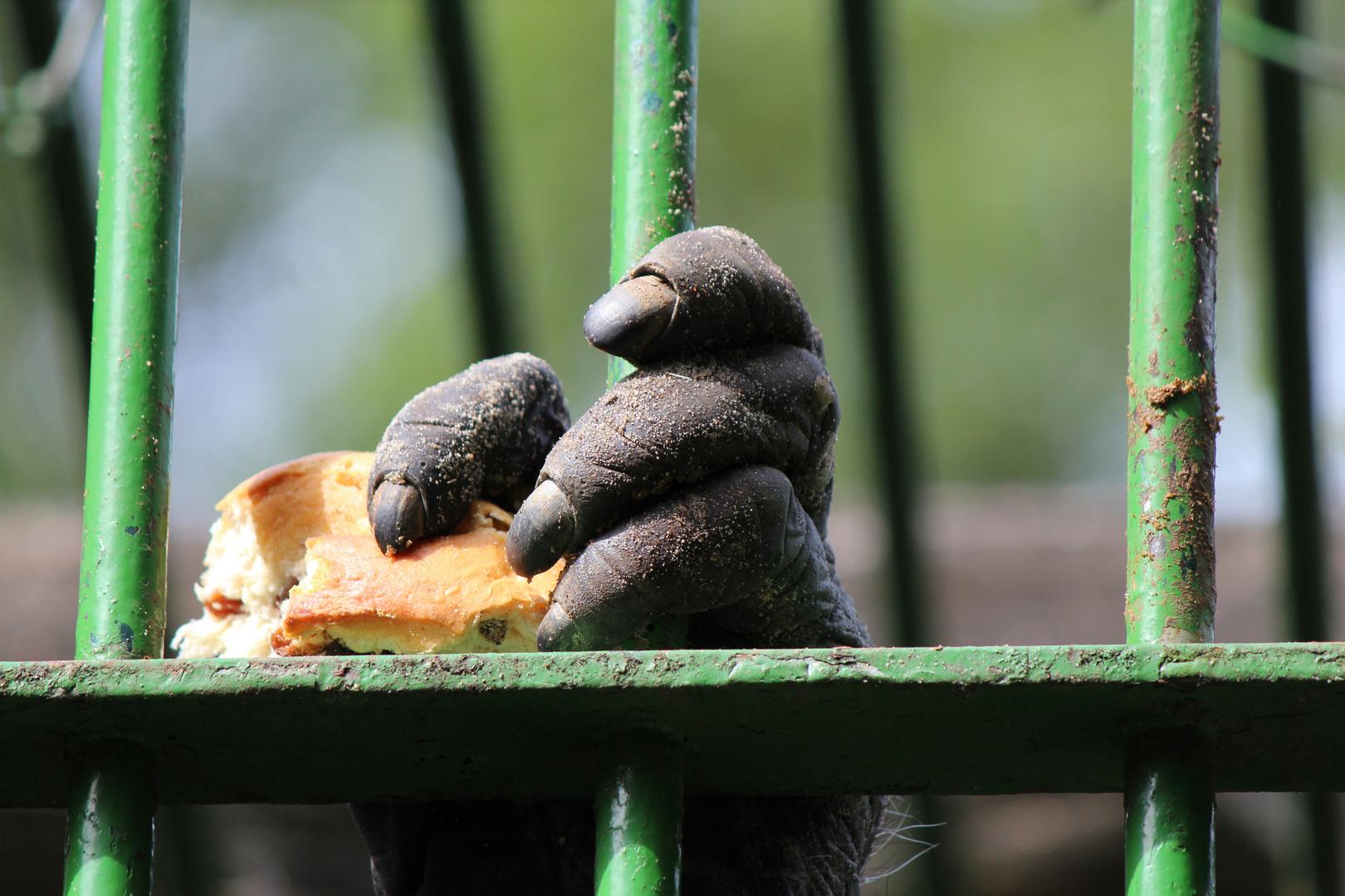 Essen hinter Stäben