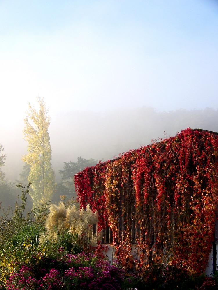 Essen Mintard im Nebel