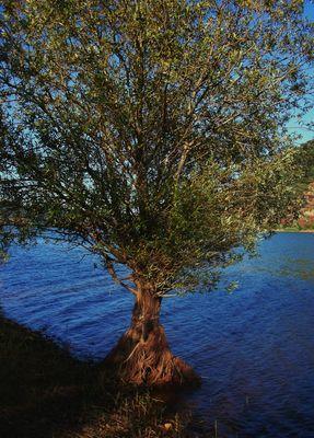 essence de vie entre terre et lac