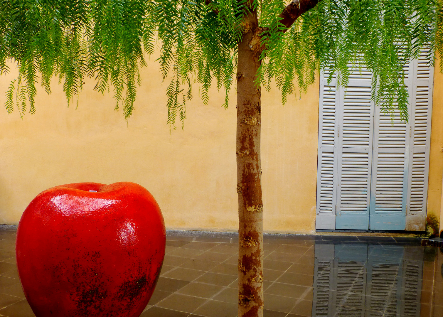 Est-ce la pluie qui a fait grossir la pomme...