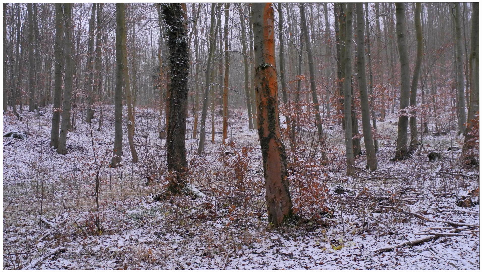 esta mañana ha nevado