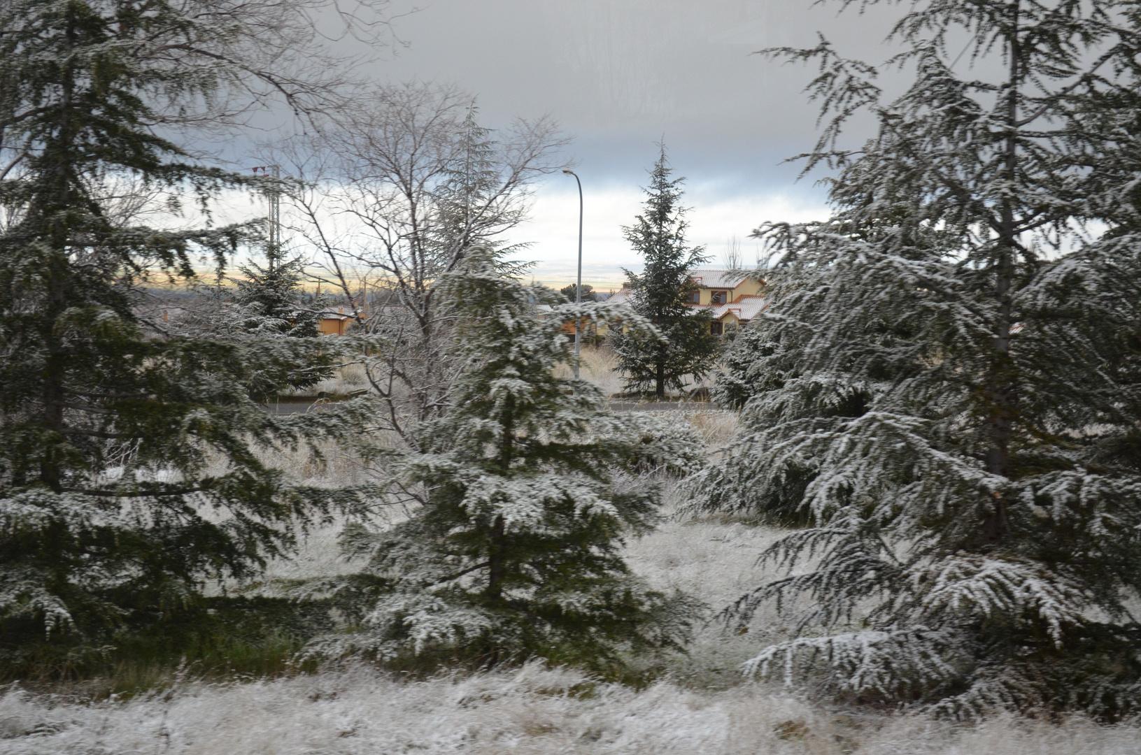 estampa de invierno