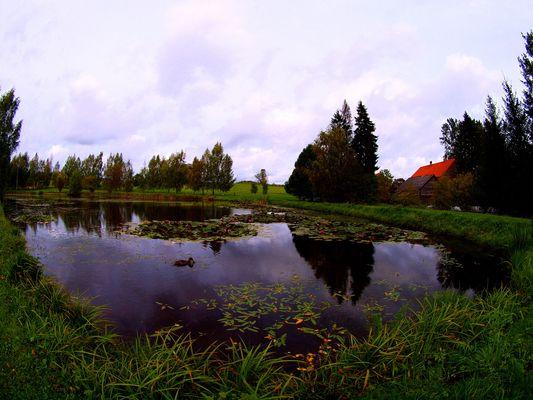 ESTANQUE DEL PARQUE NACIONAL DEL VALLE DE GAUJA. ( ESTONIA ).