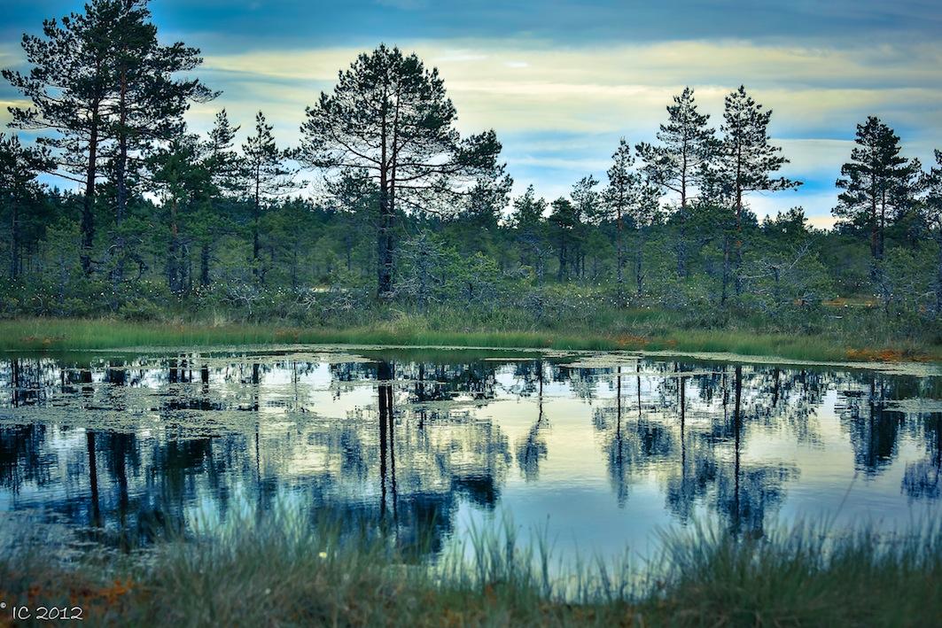Estlands Moorlandschaft
