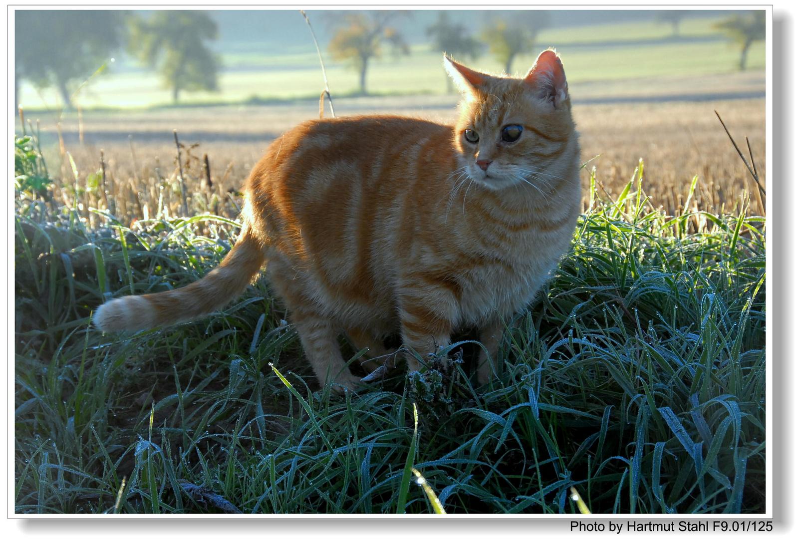 "Estoy bajando a mi gato ""Zorrito"" (Fuchsie geht mit Gassi)"