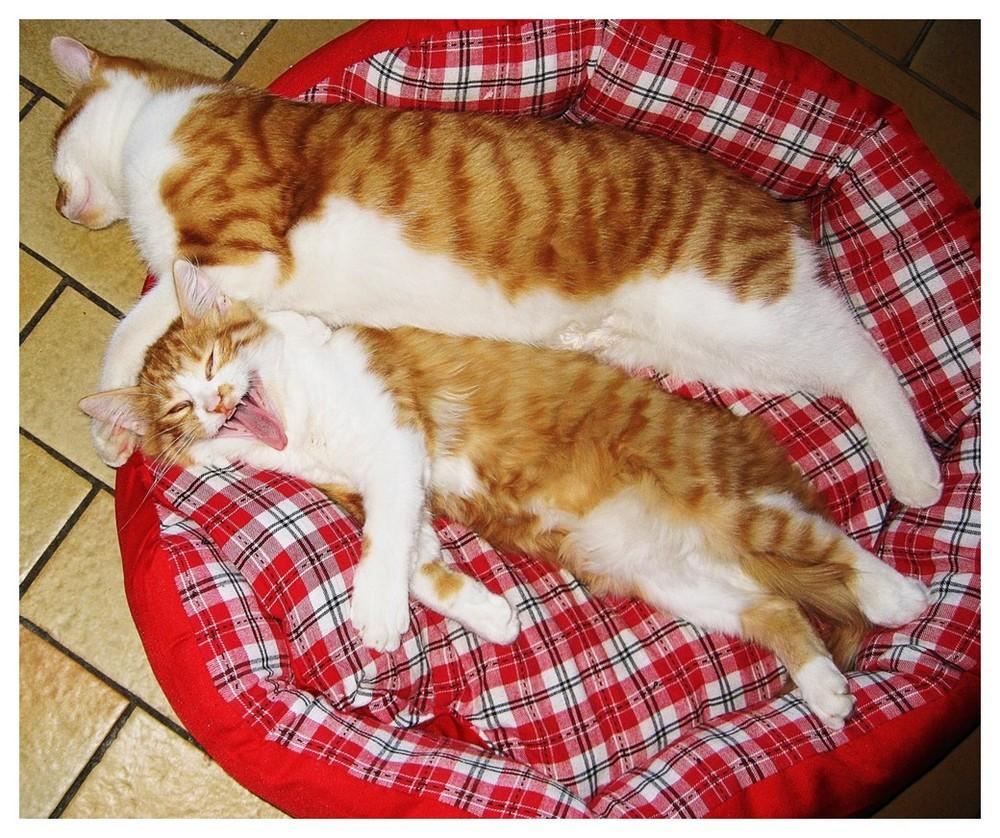 Et bailler et dormir !