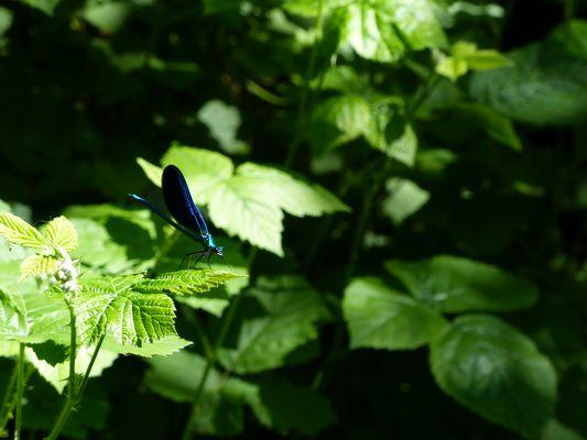 Et encore une libellule